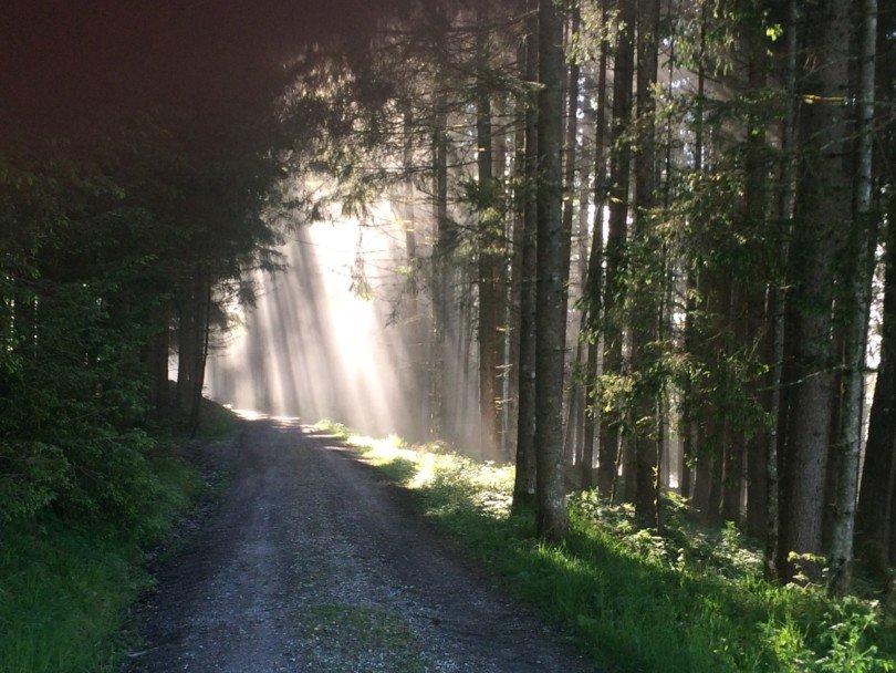 Produktlabel für mehr nachhaltige Forstwirtschaft
