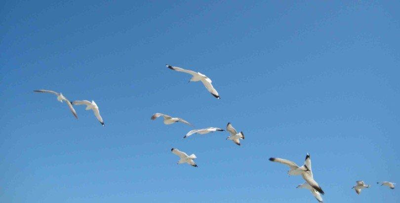 Das Nordic Ecolabel für nachhaltige Produkte